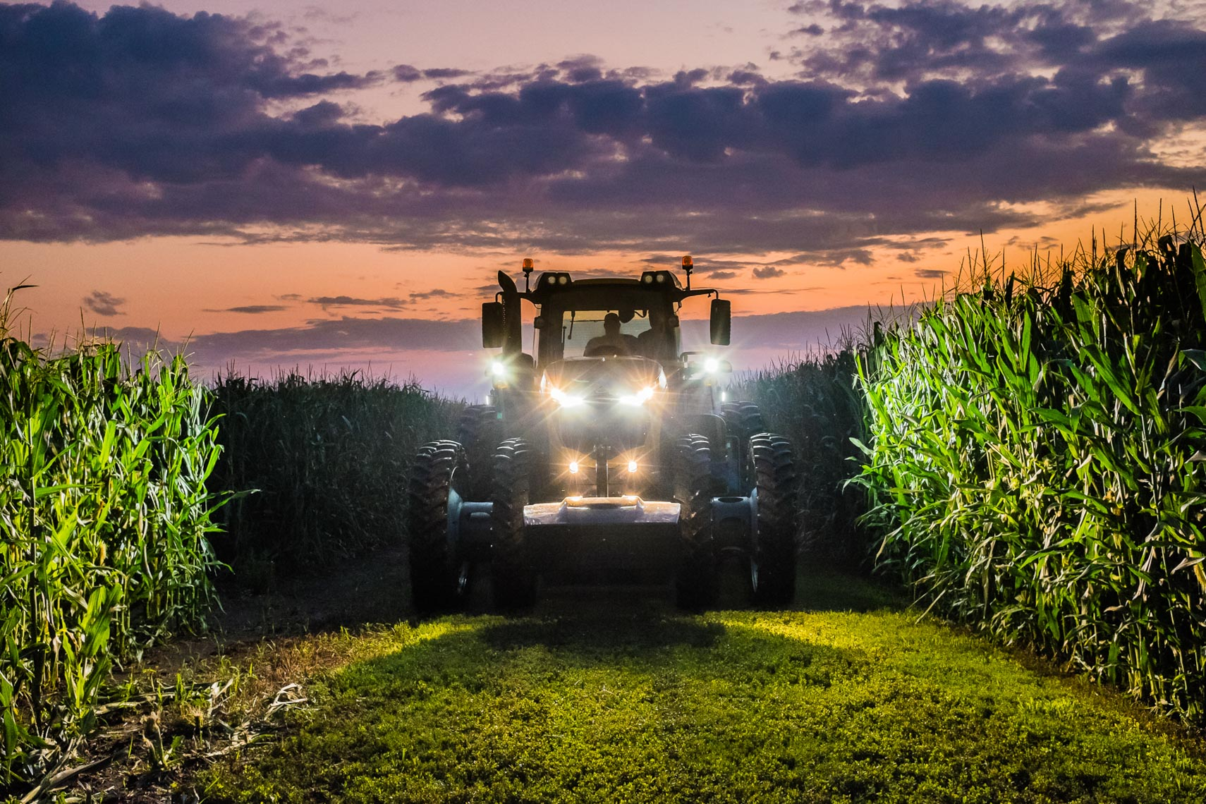 Night_Cornfield_Harvest_AGCO