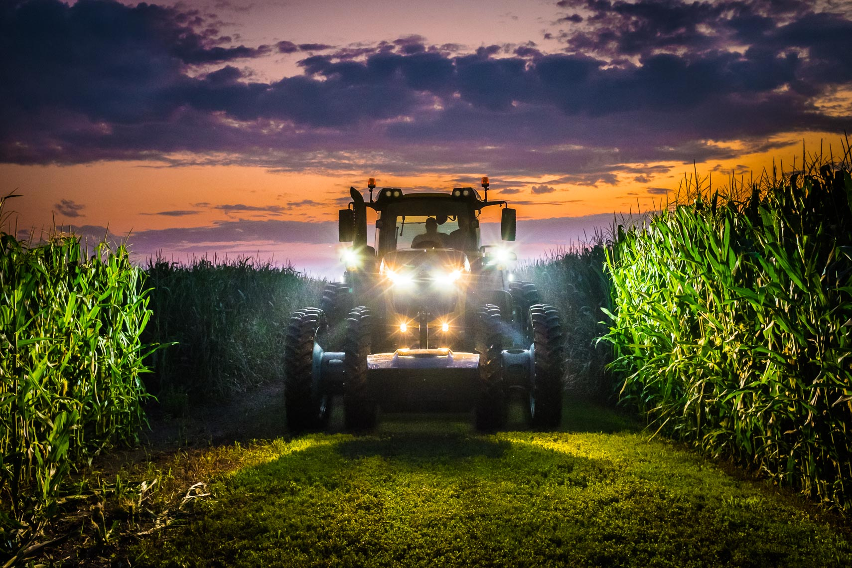 Sunset_Cornfield_Harvest